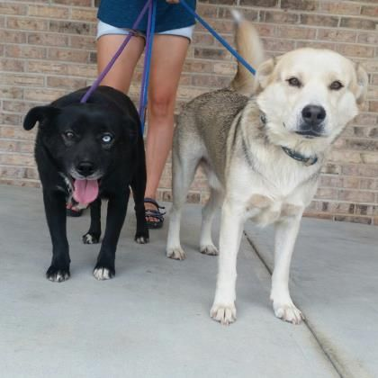 Petango.com - Meet Marshmallow & his mother Hershey.3y 4m Siberian Husky / Mix available for adoption in HELENA, AL. They need to be adopted together as they both get anxiety attacks if separated. Both extremely sweet dogs.