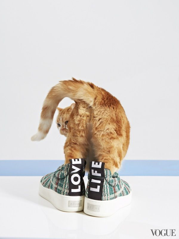 Vogue's Latest Shoot Pairs Adorable Kittens With Fashionable Shoes