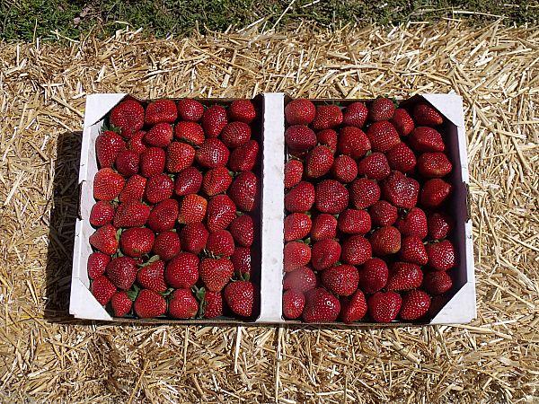 California Strawberry Festival - Oxnard, California