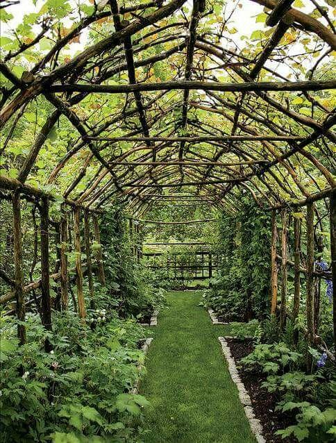 Pingl par lo 39 sur roots trees and plants pinterest - Jardin contemporain athis de l orne nantes ...