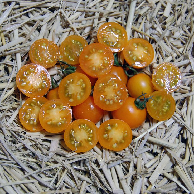 Heirloom Tomato Ambrosia Gold エアルーム・トマト・アンブロシア・ゴールド