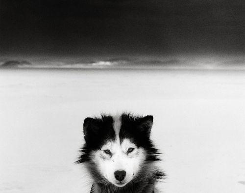 Ragnar Axelsson  Dog, Baffin Island, Canada, 2007