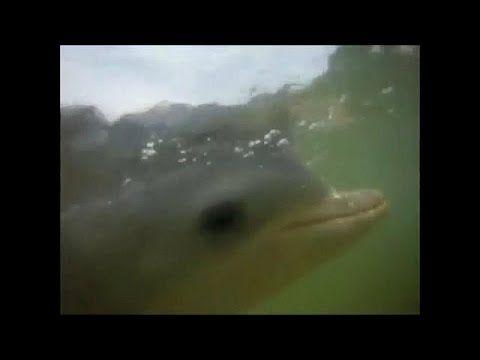 Dezenas de golfinhos mortos no Brasil