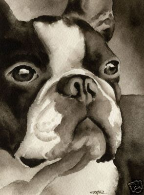Stunning Boston Terrier watercolor by DJ Rogers. I love the way this painter catches the essence of this breed!