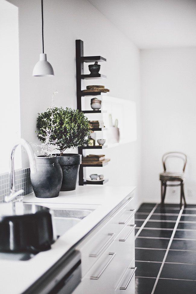 Bonsai tree in kitchen