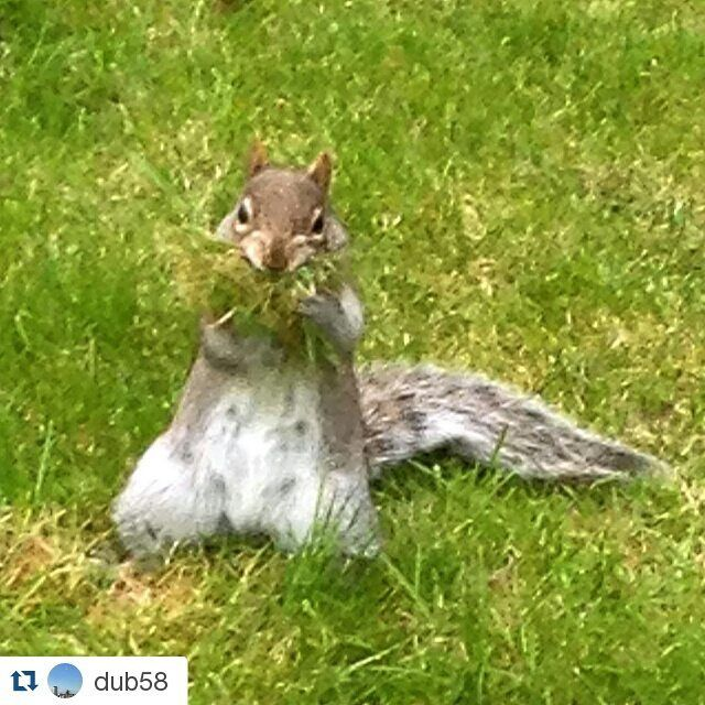 Thanks for this great shot of our furry friend on campus! :) @dub58 #trinitycollegedublin #trinitywildlife#Repost @dub58 with @repostapp・・・I'm stuffed! #dublinigers #discoverdublin #igersdublin #squirrel #trinitycollege #trinitysquirrel