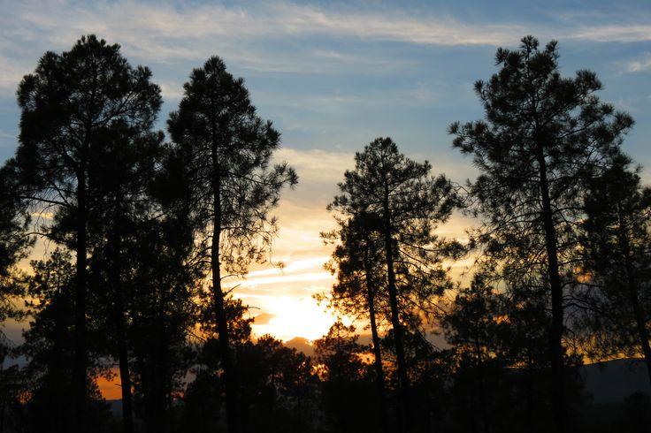 Puesta de sol en el bosque #extremadura #granadilla #atardecer #puestadesol
