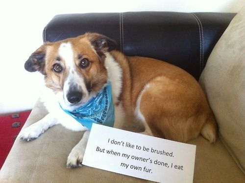17 Best Images About Dogs And Puppies On Pinterest