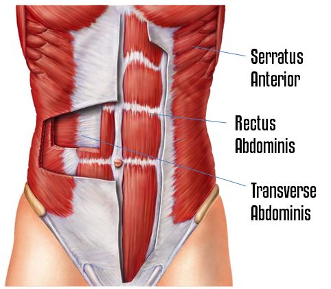 "Crawling Planks hit the transverse abdominis, rectus abdominis, and serratus — 3 muscles that TIGHTEN the core, add abdominal definition, and carve out the ""finger-like"" muscles under your chest,"