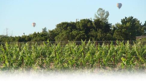 Merriam Vineyards - Our Estate Vineyards: Windacre and Los Amigos Vineyards