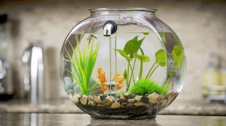 Deze vissenkom op Kickstarter reinigt zichzelf