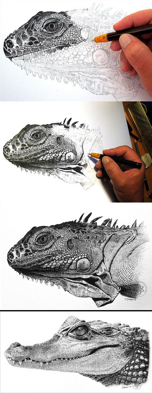 These reptile pieces are amazing - both detailed and interesting to look at. I particularly like the texture of the scales. Pointillism in pen and ink: Iguana and Young Caliman by Paul Brady