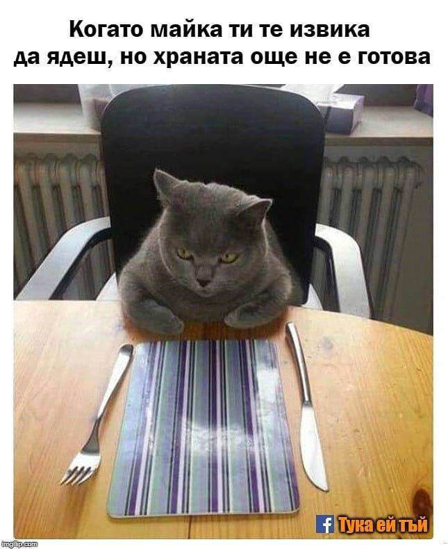 Meme Memes Instameme Zabavno Smyah Smeshno Humor Hahaha Haha Haha Hahaha Followme Fun Laugh Funny Cat Pictures Funny Cats Cat Photo