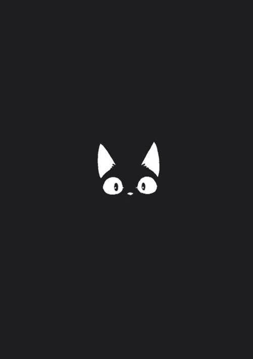 Neko, cat , gatto