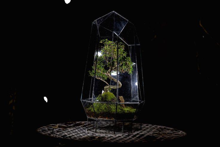 Crystal Terrarium by Angles & Earth.