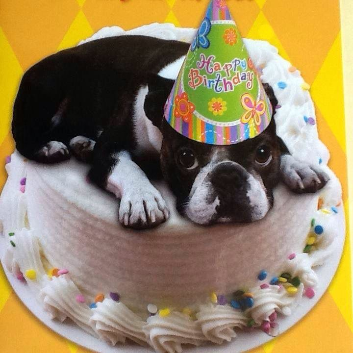 1491 Best Images About Boston Terriers And Dog Things On
