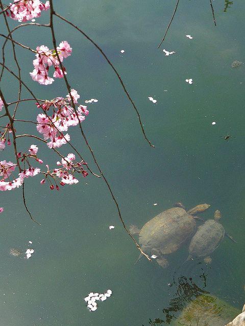Happily by Matsuura, via Flickr