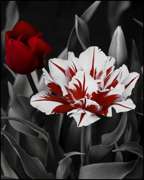 Black and White and Red