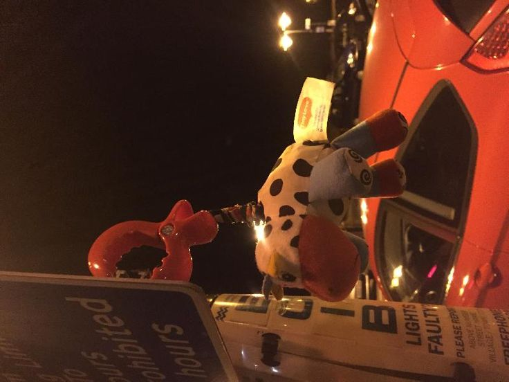 Found on 20 Nov. 2015 @ St Mary's Street, Ely. This little chap is lost in the St Mary's Street Car Park, Ely Cambs. He's hanging off a signpost near the entrance Visit: https://whiteboomerang.com/lostteddy/msg/570gv3 (Posted by Sharon on 20 Nov. 2015)