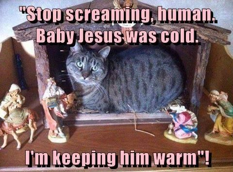 Cute Funny Memes For Him : Best funny animals caption images funny animals