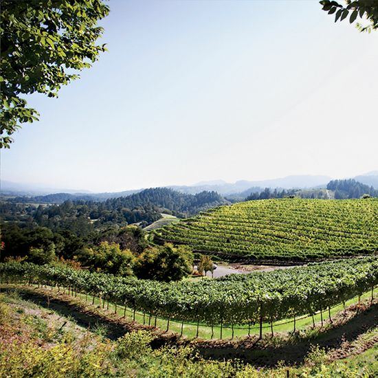 Best Napa Valley Wineries to Visit according to Food & Wine