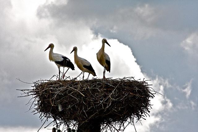 Storks in Mazury, Poland | Flickr - Photo Sharing!