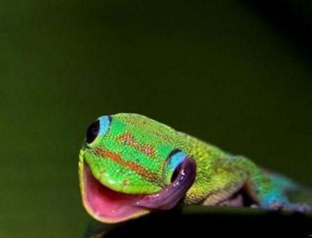animali buffi camaleonte allegro