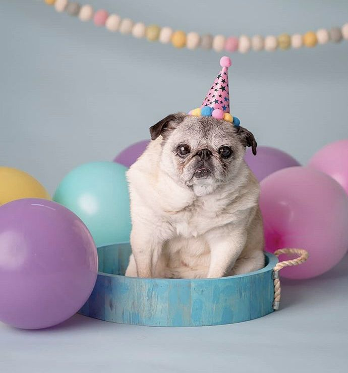 Pin By Candice May Martin On Pastels Birthday Meme Bulldog French Bulldog