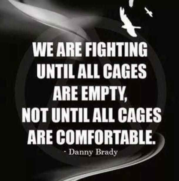 """""""We are fighting until all cages are empty, not until all cages are comfortable."""" ~Danny Brady"""