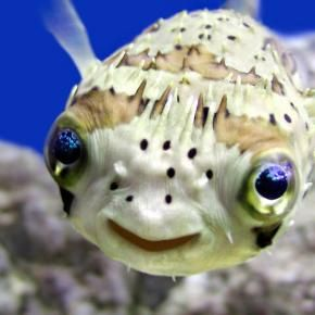 Puffer - this picture always makes me laugh out loud