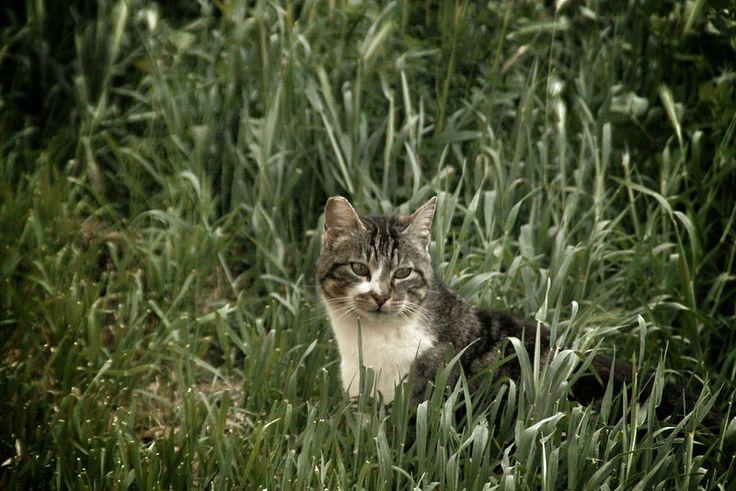 Feel Wild. by sergioski1982 #Gatos #Cats #FotoGatetes