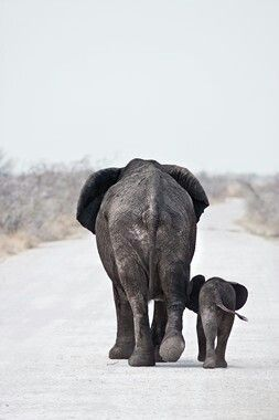 Elephant love.                                                                                                                                                      More