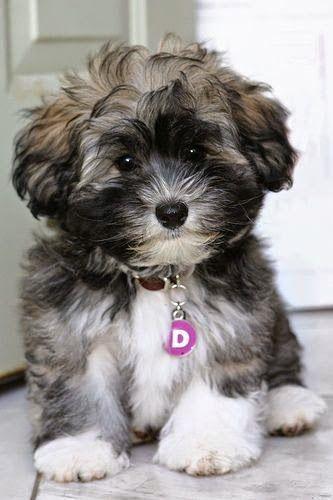 Adorable puppy furball