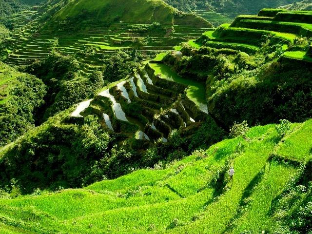 Paddy rice fields - steep terrain