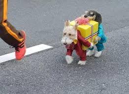 dog fancy dress - Google Search