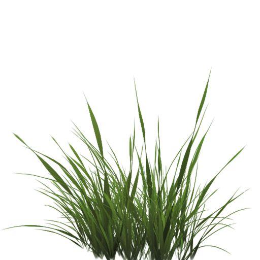 grass texture alpha - Поиск в Google | grass | Pinterest ...