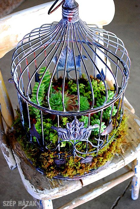 Birdcage and succulents - perfect decoration