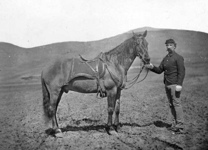 Comanche: The Horse that Survived the Battle of the Little Bighorn, Part 1   Jenny Shank   Books & Writers   NewWest.Net