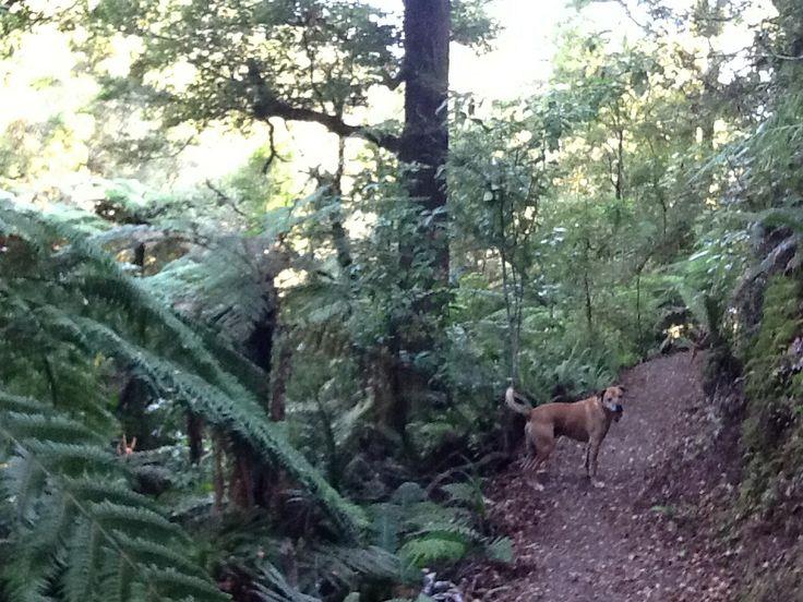 Bush Stokes Valley New Zealand