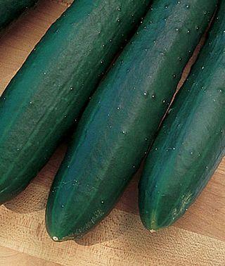 Cucumber, Sweet Burpless Hybrid, , large