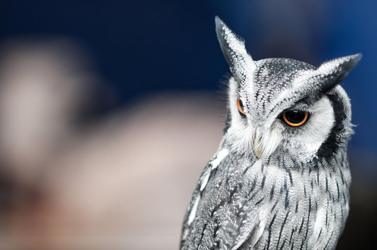 Give a hoot by Stephen Topp on 500px