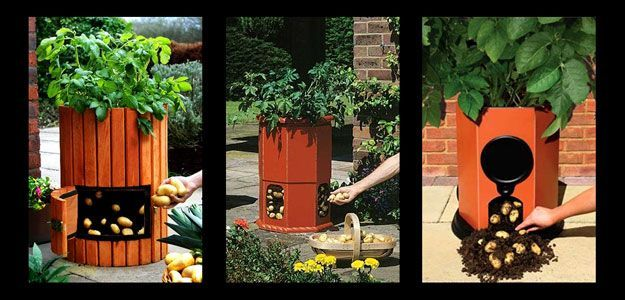 Potato Barrel: How to Grow Potatoes - Potato Barrel - Potato Barrels - Growing Potatoes in Containers