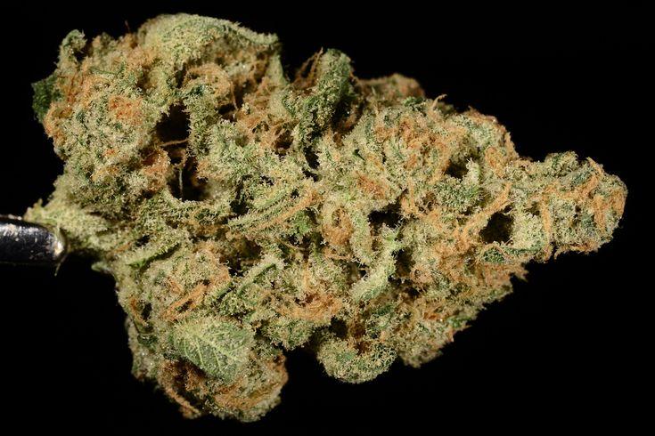 Oaktown Crippler (marijuana review, Strain Theory)
