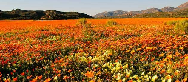 Garies is a small agricultural centre situated in South Africa's Northern Cape province about 110 km south of Springbok, the chief town of the Namaqualand district. Current population approximately 1500....  Welcome to Extreme Frontiers... Our website is http://gerhard53.wixsite.com/extreme-frontiers