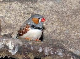 pájaro tropical pico rojo este pájaro se encuentra la mayoría en las costas de galápagos y ecuador  pico rojo   canal perros https://www.google.com.ec/search?q=especies+endemicas+del+ecuador&rlz=1C1KYPA_esEC731EC731&source=lnms&tbm=isch&sa=X&ved=0ahUKEwidgNSTpcXTAhWBRyYKHVEGCpIQ_AUICCgB&biw=1600&bih=794#tbm=isch&q=pajaro+tropical+pico+rojo+&imgrc=oK8fEjCkczn9IM: