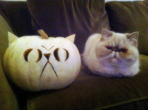 This cat (on the left) sitting with an exact copy of herself in pumpkin form (on…