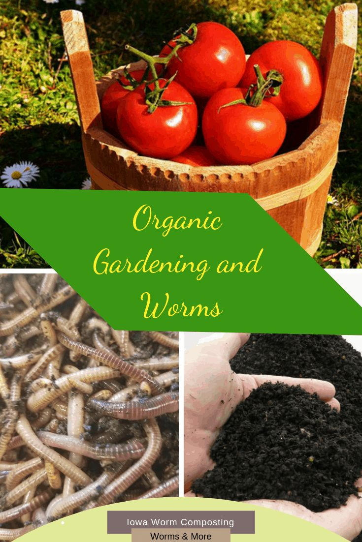 Organic Gardening And Worms Worm Composting Organic Gardening