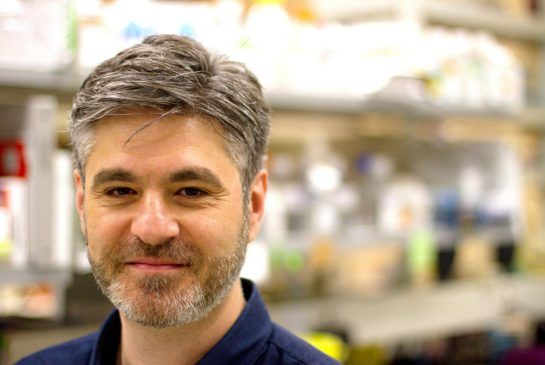 Dr. Stambolic of The Princess Margaret, finds tumour suppressor gene plays key role in success of cancer treatments and may lead to more tailored, effective therapies.