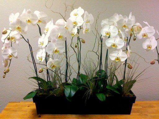 plantas orquideas de interior - Buscar con Google