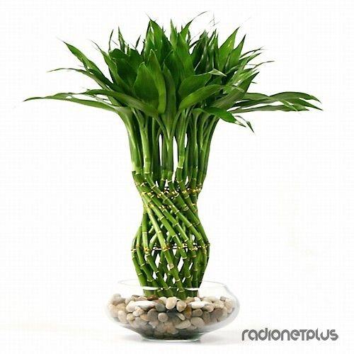 Комнатные растения для материального благополучия